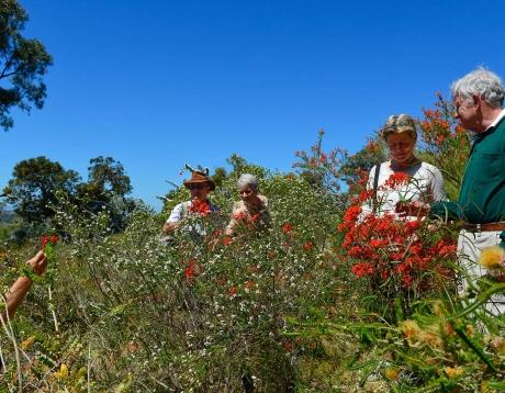 Western Wildflowers Discovery
