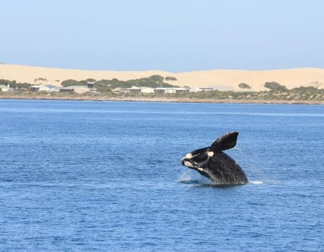 Eyre Peninsula Whale & Seafood Discovery